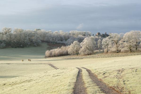 Hoar frost Dinefwr